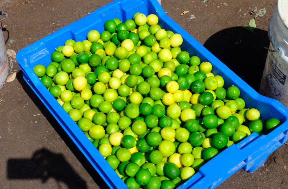 galeria-limon-de-pica-6